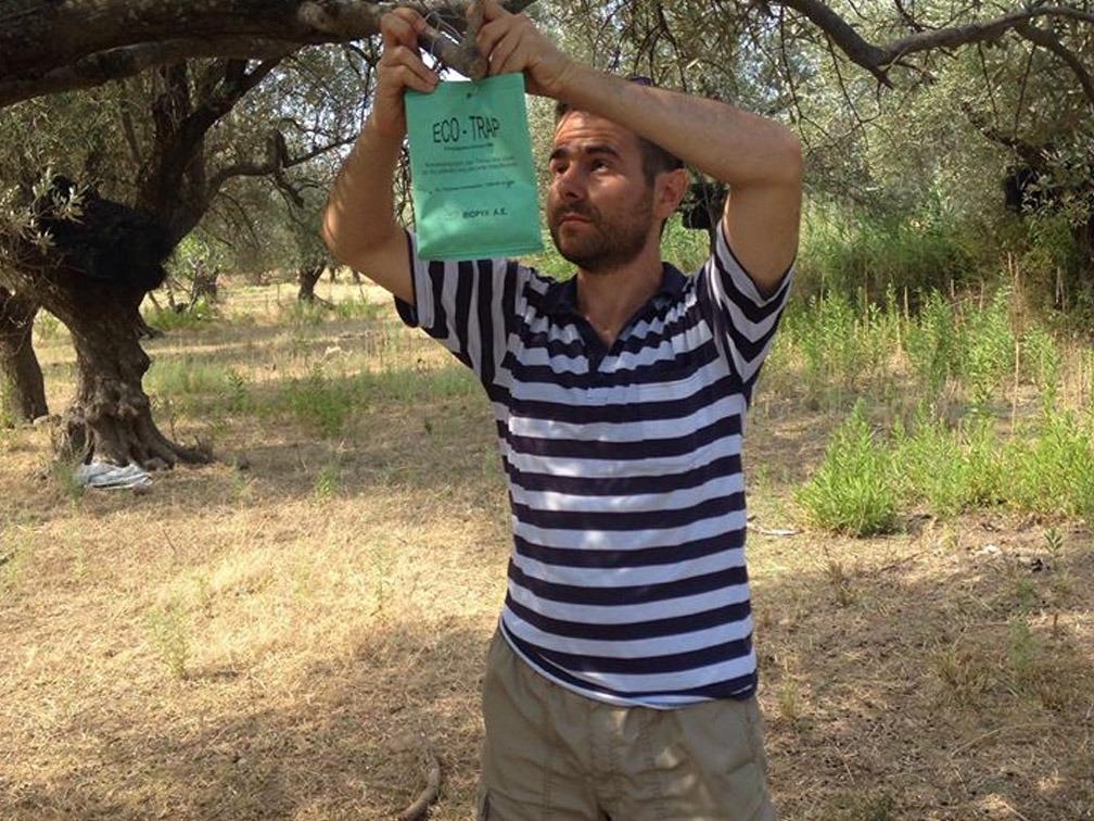 Bio-Anbau mit Fallen gegen Insekten